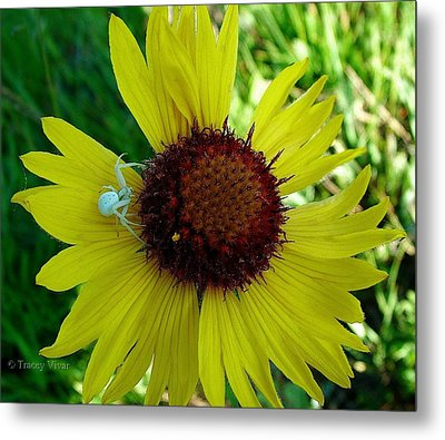 Indian Blanket With Spider Metal Print by Tracey Vivar