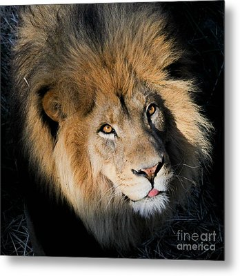 Ingozi Metal Print by Laurie Chrisco