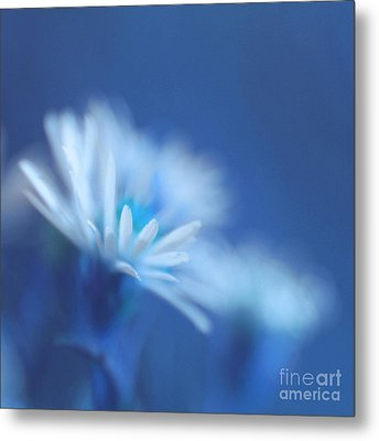 Innocence 11b Metal Print by Variance Collections