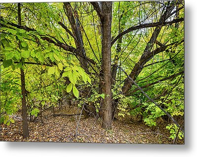 Into The Woods Metal Print by James BO Insogna