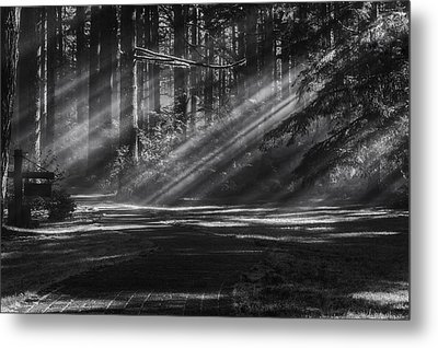 Into The Woods Metal Print by Mark Kiver