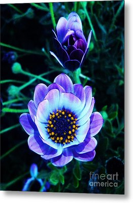 Intuition Metal Print by Daniele Smith