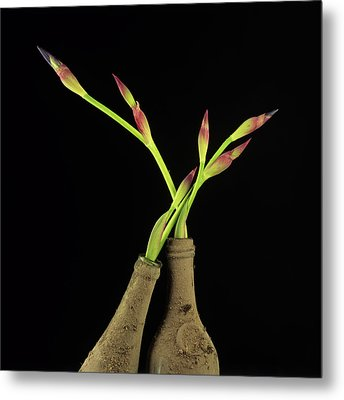 Iris Metal Print by Bernard Jaubert