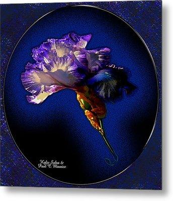 Iris Metal Print by Kylie Sabra and Paul C Maurice