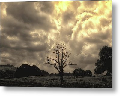 Isolated Metal Print by Martin Newman