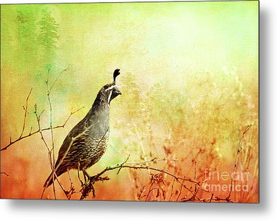 Its In The Air Metal Print by Beve Brown-Clark Photography