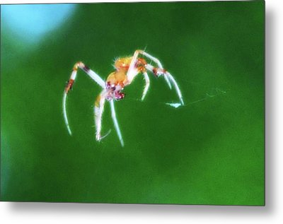 Itsy Bitsy Spider Metal Print by Bill Cannon