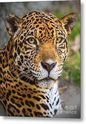 Jaguar Portrait Metal Print by Jamie Pham