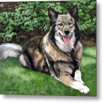 Jake Metal Print by Sandra Chase