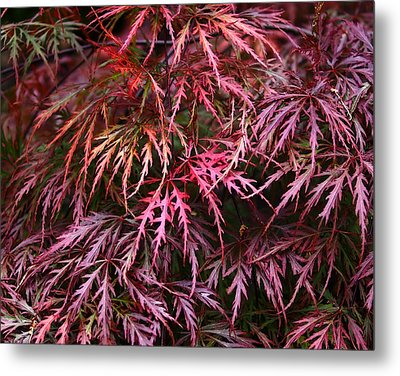 Japanese Maple Metal Print by Rona Black