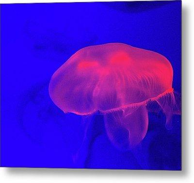 Jellyfish Metal Print by Martin Newman