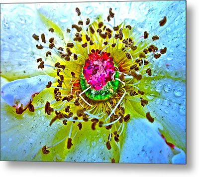 Jive Metal Print by Gwyn Newcombe