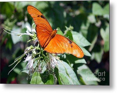 Julia Butterfly Metal Print by Kelly Holm