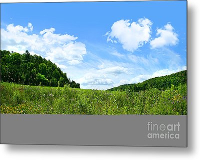 June Flowers With Bright Summer Sky Metal Print by Sandra Cunningham