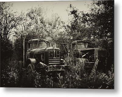 Junkyard Dogs IIi Metal Print by Off The Beaten Path Photography - Andrew Alexander