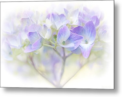 Just A Whisper Hydrangea Flower Metal Print by Jennie Marie Schell