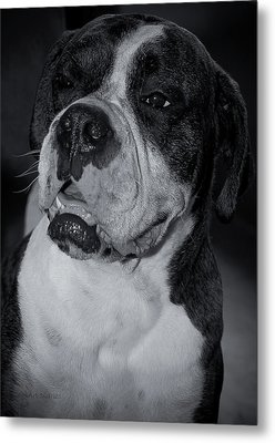 Just Handsome II Metal Print by DigiArt Diaries by Vicky B Fuller