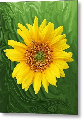 Kansas Sunflower Metal Print by Jim  Darnall