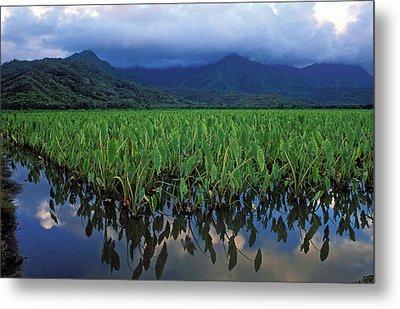 Kauai Taro Field Metal Print by Kathy Yates