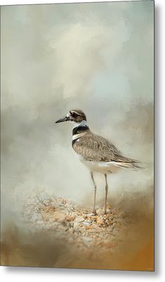 Killdeer On The Rocks Metal Print by Jai Johnson