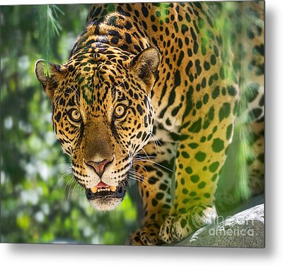 King Of The Forest Metal Print by Jamie Pham