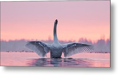 King Of The Water And The Sunset  Metal Print by Roeselien Raimond