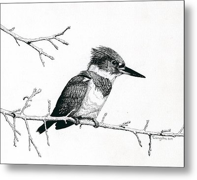 Kingfisher Metal Print by Timothy Livingston