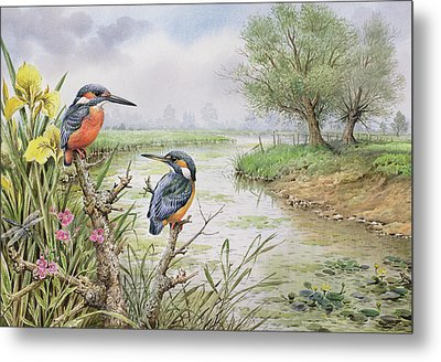 Kingfishers On The Riverbank Metal Print by Carl Donner