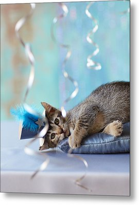 Kitten Wearing A Party Hat Lying Metal Print by Gillham Studios