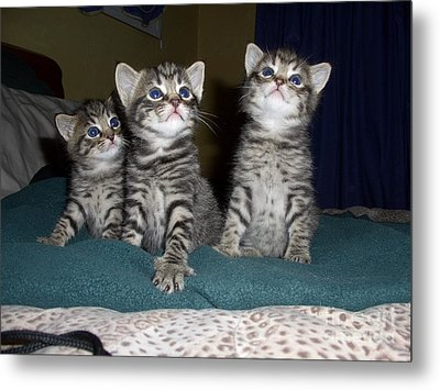 Kittens  Metal Print by Joyce Woodhouse