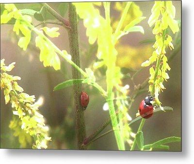 Ladybug Ladybug Metal Print by Toni Hopper