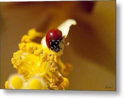Ladybug Picking Flowers Metal Print by Diana Haronis