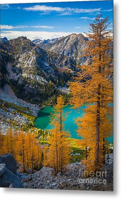 Larches At Colchuck Metal Print by Inge Johnsson