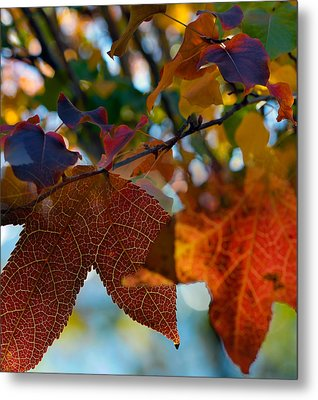 Late Autumn Colors Metal Print by Stephen Anderson