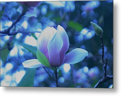 Late Summer Bloom Metal Print by John  Glass