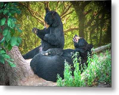 Laughing Bears Metal Print by John Haldane