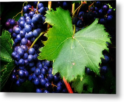 Leaf And Grapes Metal Print by Greg Mimbs