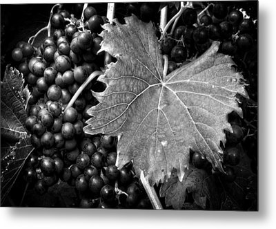 Leaf And Grapes In Black And White Metal Print by Greg Mimbs