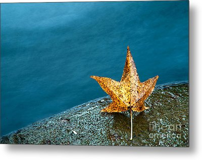 Leaf Metal Print by Chris Mason