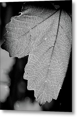 Leaf Light Black And White Metal Print by James Granberry
