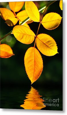 Leafs Over Water Metal Print by Carlos Caetano