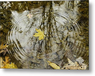 Leaves And Water Metal Print by Andrew McElvery
