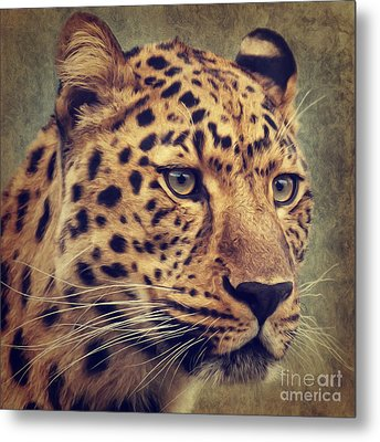 Leopard Portrait Metal Print by Angela Doelling AD DESIGN Photo and PhotoArt
