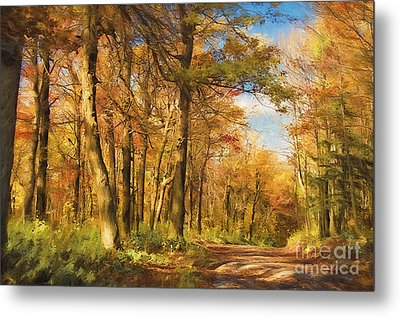 Let's Go For A Walk Metal Print by Lois Bryan