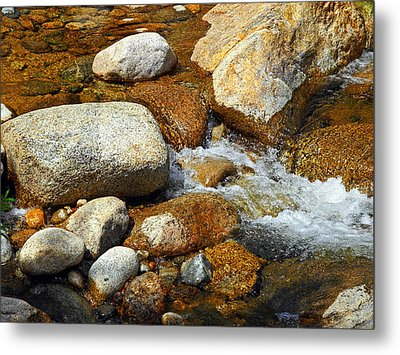 Life Of The Riverbed Metal Print by Lynda Lehmann