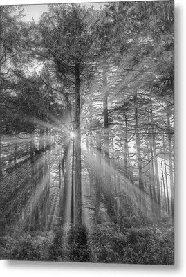 Light Metal Print by Naman Imagery