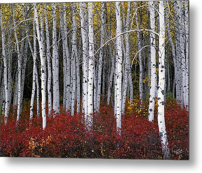 Light In Forest Metal Print by Leland D Howard
