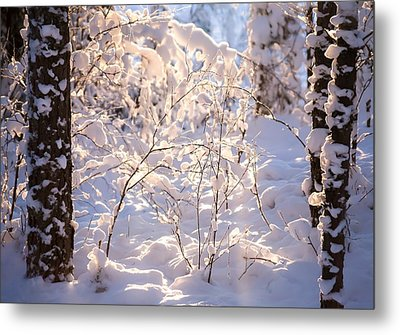 Light Of Winter Metal Print by Rose-Maries Pictures