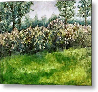 Lilac Bushes In Springtime Metal Print by Michelle Calkins