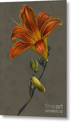 Lily Metal Print by Louise D'Orleans